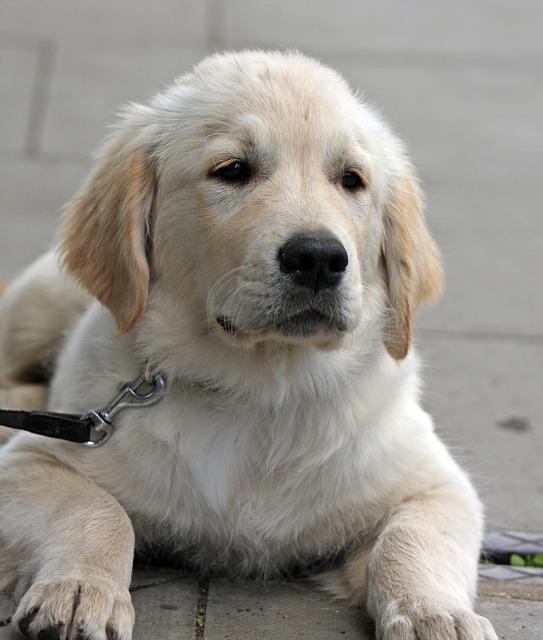 愛犬のお話 4