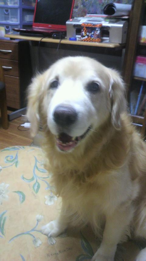 愛犬わんこがくれたもの 不思議篇
